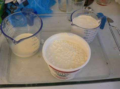 Wiki Cottage Cheese by Cottage Cheese Recipes Wiki Fandom Powered By Wikia