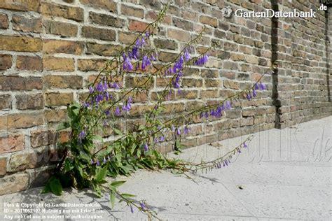 Unkraut Zwischen Steinen Entfernen 2849 by Unkraut Zwischen Pflaster Steinen Steinplatten