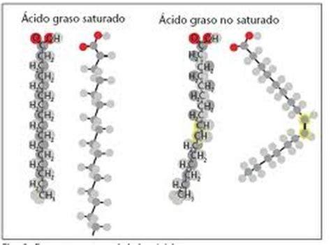 cadenas hidrocarbonadas clasificacion 193 cidos grasos l 237 pidos