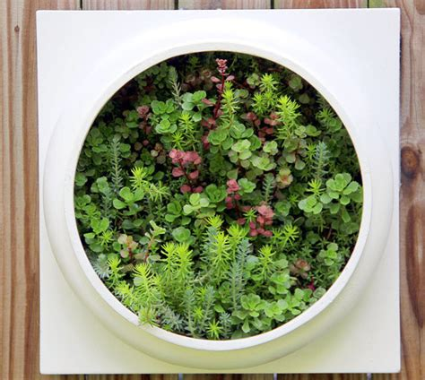 wall planter indoor living wall planter comes preplanted by twisted metals