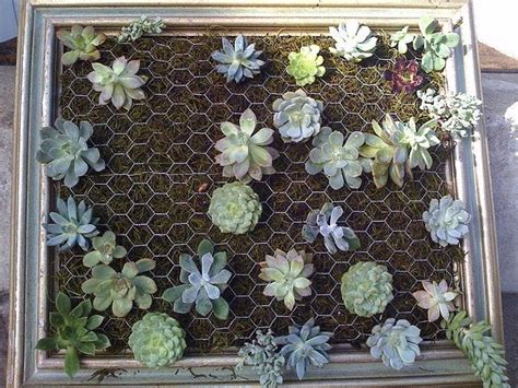 how to make a diy vertical succulent garden out of a