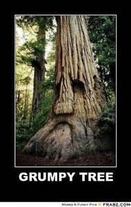 Tree Meme - grumpy tree h meme generator posterizer