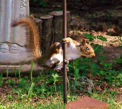 squirrel pole dancing pole dancing pinterest