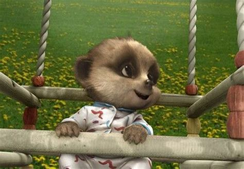 Playtime With Meerkat 1000 images about baby oleg the meerkats on