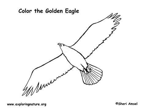 eagle golden coloring page