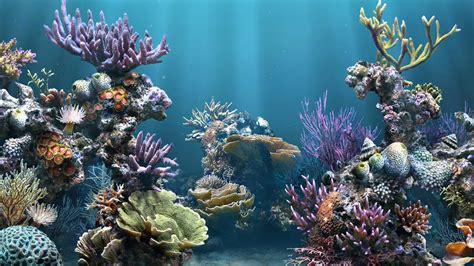 wallpaper aquarium background 25 aquarium backgrounds wallpapers images pictures
