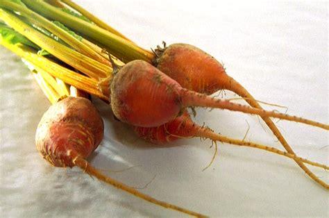 root vegetable identification identification chart