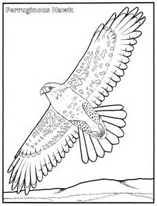 hawk coloring pages hawk coloring pages