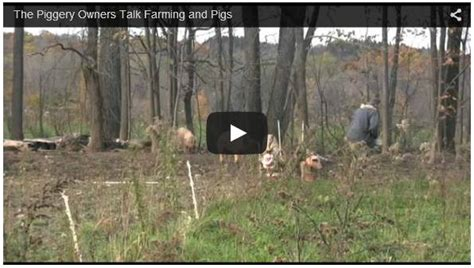 backyard piggery business how to setup a pig farming business how to raise livestock
