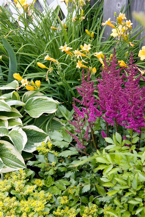the best perennials for shade gardens favorite shade