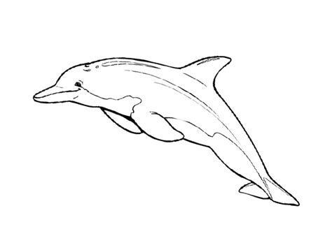 cartoon dolphin coloring page free coloring pages of cartoon dolphin