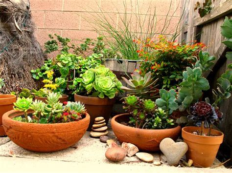 rock garden with potted plants cluster your garden containers