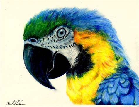 Colored Drawings Macaw Colored Pencil Drawing By Pinsetter1991 On Deviantart