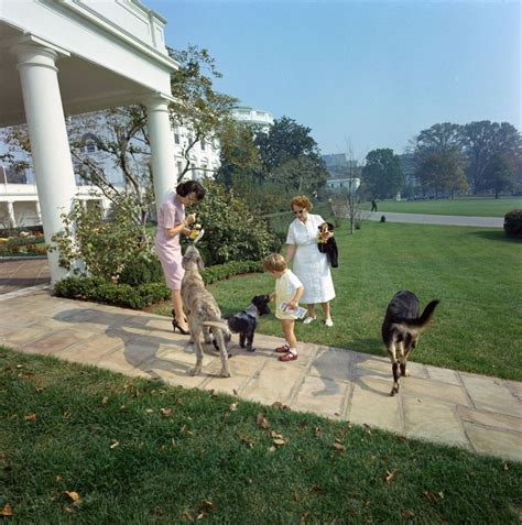 dogs in the white house st c363 6 63 john f kennedy jr with family dogs clipper shannon and wolf at the
