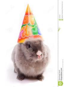 bunny in a happy birthday cap royalty free stock photo