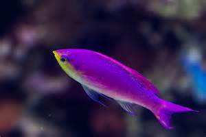 neon colored fish four hours at the new aquarium bicycle with a view