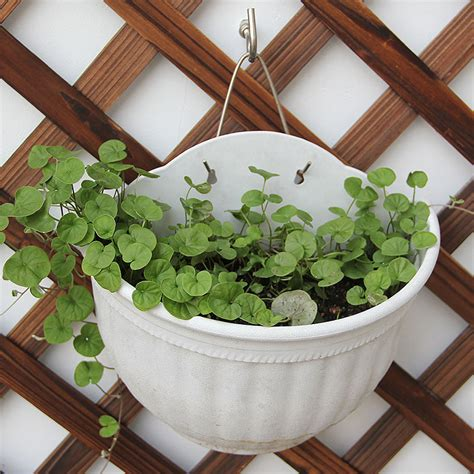 Aliexpress Com Buy Plant Flower Pot Planter Hanging Pot Garden Wall Hanging Baskets