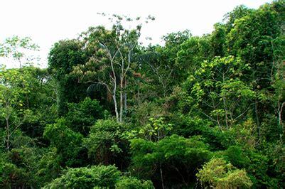 los bosques ibericos practicos restauraci 243 n en bosques tropicales fundamentos ecol 243 gicos pr 225 cticos y sociales forestal maderero