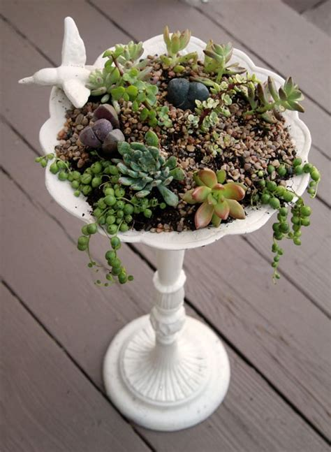 Succulents In Bathroom by Succulents And Living Stones In A Bird Bath Container Gardening Gardens Herbs