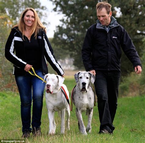 Danes Has A New by Update The Blind Great Dane And Devoted Guide