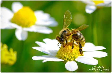 are bees color blind 2 ways to avoid pesticides commercial fertilizer forever