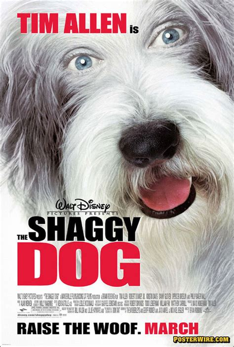 shaggy dogs s best friend posterwire
