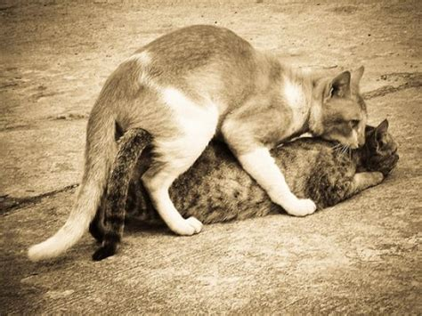 dogs mating with cats dogs mating with cats picture and images