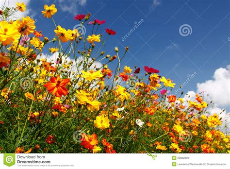 the flowers wild dream houses from movies blue skies white clouds and colorful wildflowers royalty