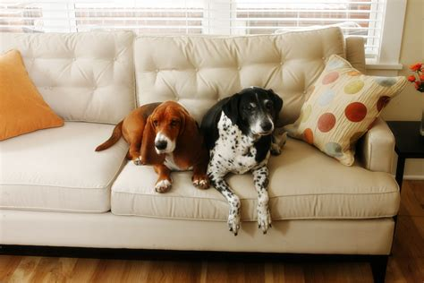two dogs in a house the livable home homedesignfordogs