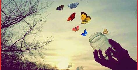 imagenes mariposas libres imagenes de mariposas libres fondo de pantalla imagenes