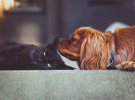 Piante Tossiche Per Gatti by Piante Tossiche Per Cani E Gatti Quali Sono Dogalize