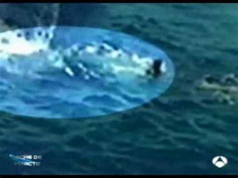 submarino el tiburn asesino ataque de tiburon blanco impacto tv youtube