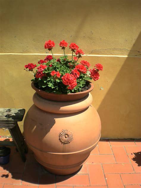 vaso di gerani vaso di gerani agriturismo podere le pialle