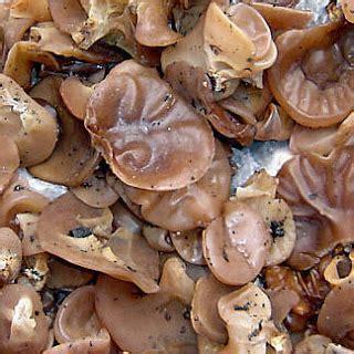 Obat Bibit Jamur Tiram wirausaha jamur tiram manfaat jamur kuping sebagai