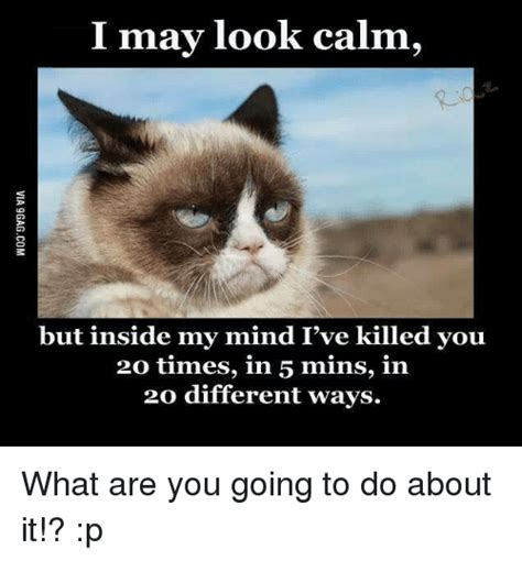 you re going grumpy history 25 best memes about grumpy cat grumpy cat memes