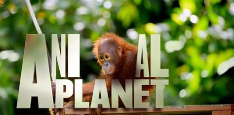 animal planet quiz top animal planet quizzes trivia questions answers proprofs quizzes