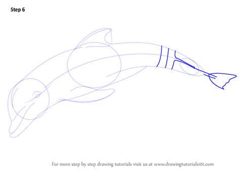 learn how to draw winter the dolphin marine mammals step