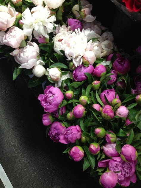 peonies in season peony season flower arrangements pinterest seasons