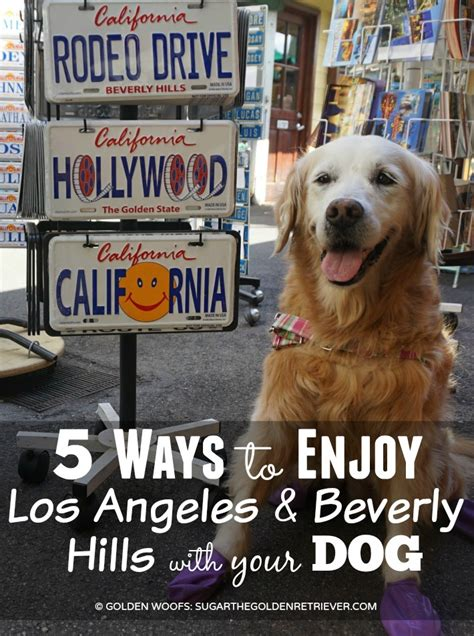 dogs los angeles 5 ways to enjoy los angeles beverly with your golden woofs