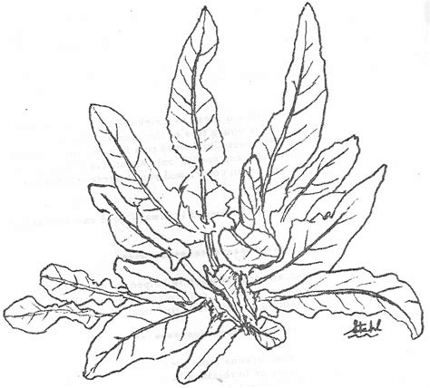 Free Coloring Pages Of Sea Plants Plants Coloring Page