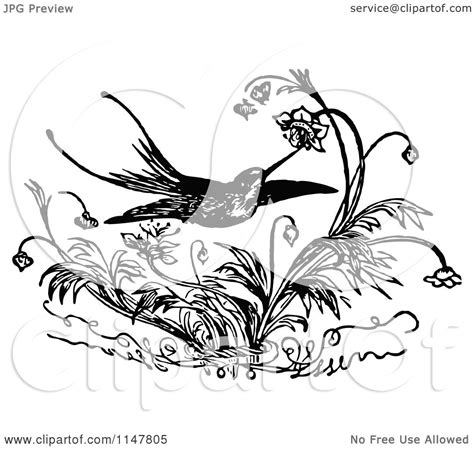 bevalet s hummingbirds and flowers a vintage grayscale coloring book vintage grayscale coloring books volume 3 books clipart of a retro vintage black and white hummingbird and