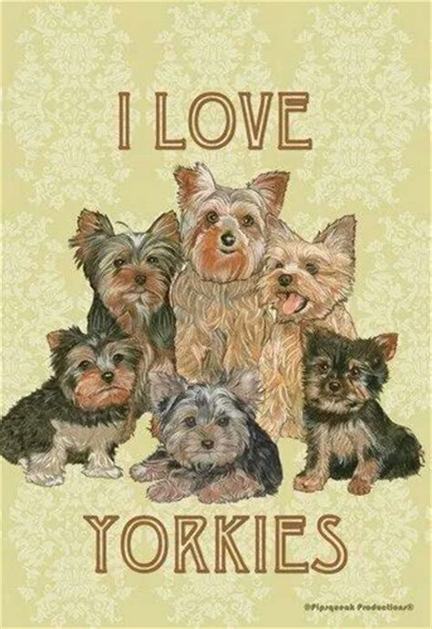 do teacup yorkies bark a lot 1000 images about yorkies on yorkie terrier and yorkie puppy