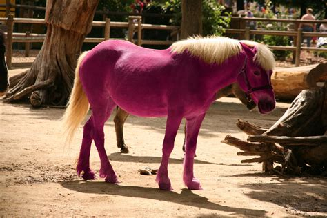 Pink Pony pink pony pascal terjan flickr
