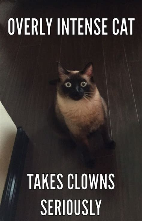 Funny Clown Memes - overly intense cat takes clowns seriously funny