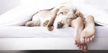 Sleep Number Beds And Dogs Sleepovers With Your Gublog Gudog Uk