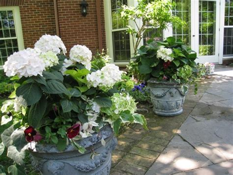 container gardening minnesota 17 best images about flowers on planters