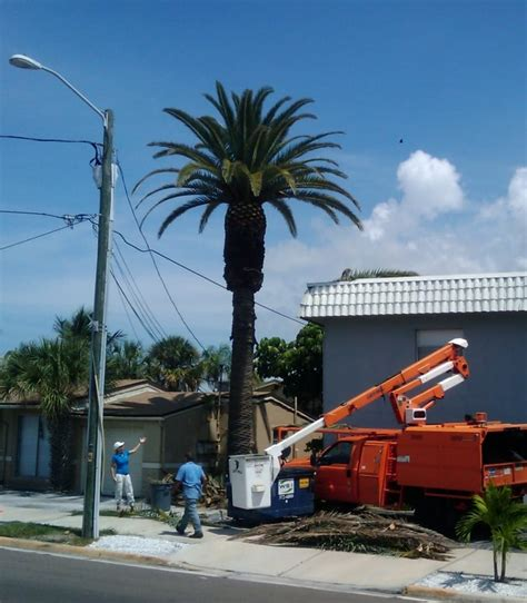 new year melbourne fl tree service express 17 photos tree services west