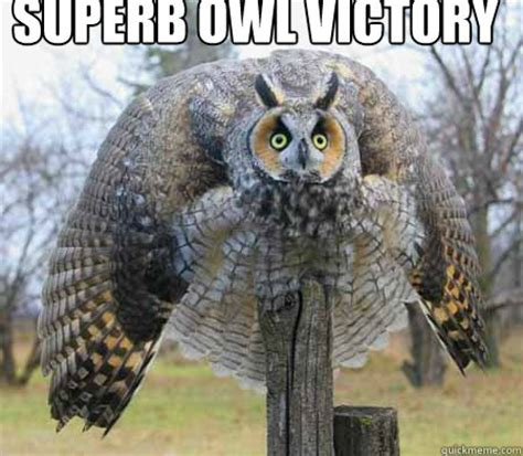 Superb Owl Meme - the official superb owl thread