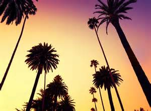 Palm Tree Wall Mural california 4k