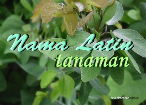 toko herbal yogyakarta menyajikan informasi tanaman
